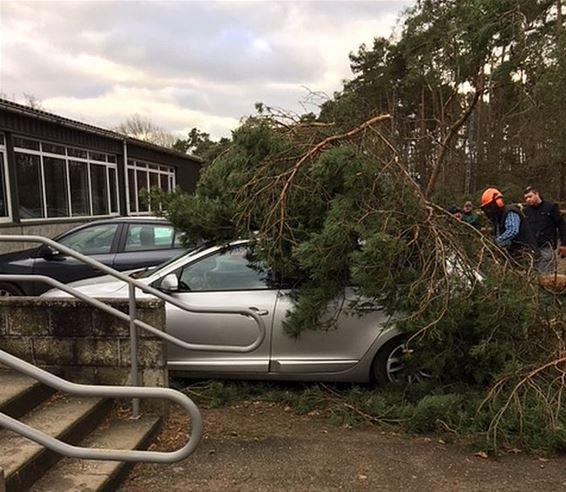 Auto's beschadigd door vallende bomen