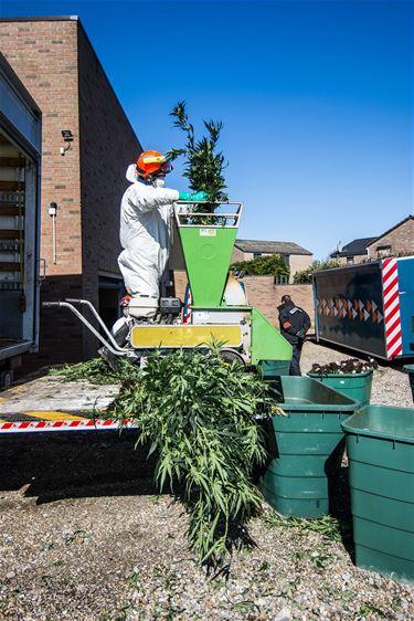 Cannabisplantage aangetroffen