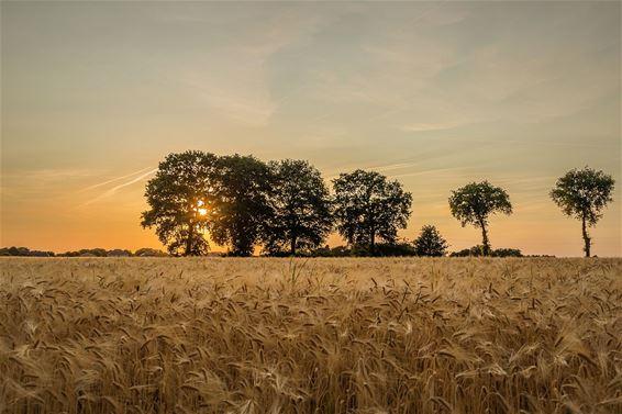 Een gouden zonsondergang