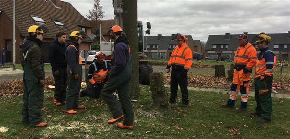 'Geen boom nog veilig'