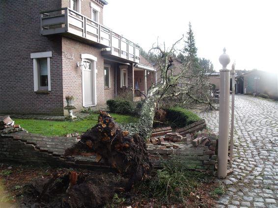 Nog wat stormschade van gisteren
