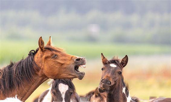 Paarden onder elkaar