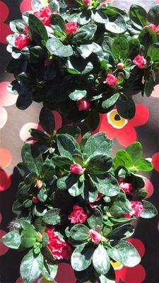 Plantjesweekend bracht bijna 5.700 euro op