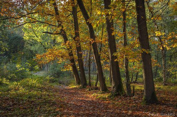 Schoonheid in de herfst