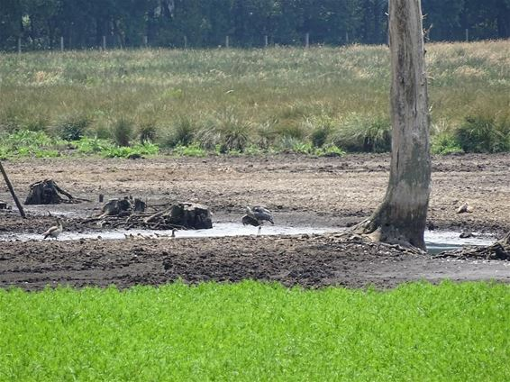 'Zwarte Water' staat praktisch droog
